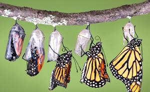 cambio vita da bruco a farfalla