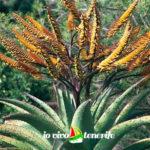 curiosità pianta del giardino botanico