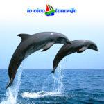 curiosità delfini