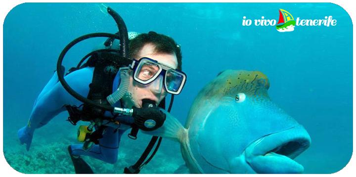 tenerife sub e pesce grande