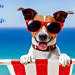 Animali domestici: vengo a Tenerife con… i pelosi!!