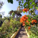 Giardini di Tenerife: Sitio Litre e Parco del Drago
