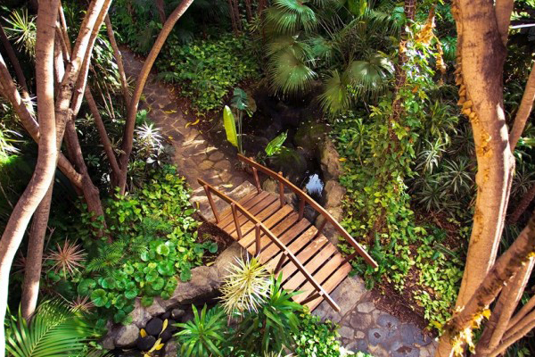 Giardini di Tenerife: Palmetum e Hotel Botanico