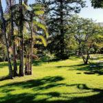 Giardini di Tenerife: García Sanabria e parco Taoro