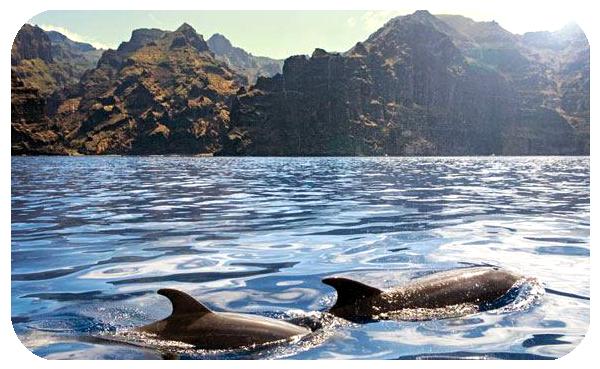 vivere a tenerife delfini