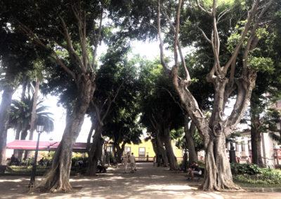 Turismo Icod de los Vinos (8)