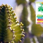 Aloe Park Tenerife – Aloe, banani e molto altro ancora!