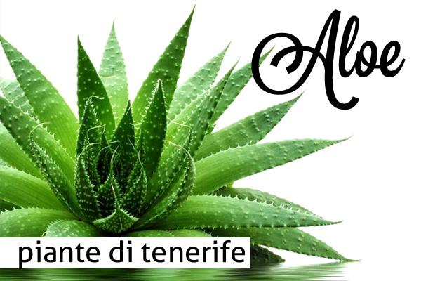 Aloe di Tenerife – Regina delle piante dalle tante qualità
